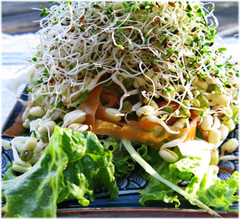 Home Grown Sprout Salad
