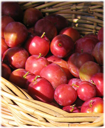 Basket of Plums